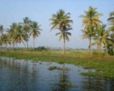 Vembanad  lake enchanting view